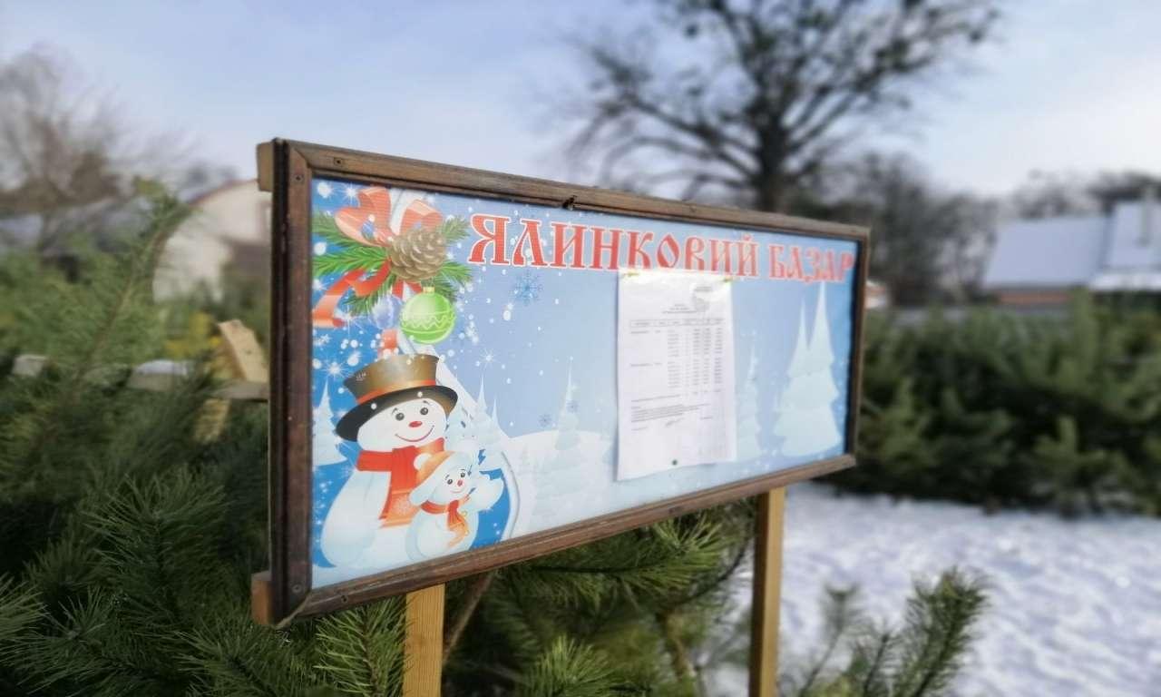 У Руськополянському лісництві вже почали новорічний ярмарок: реалізовано понад 200 ялинок-543