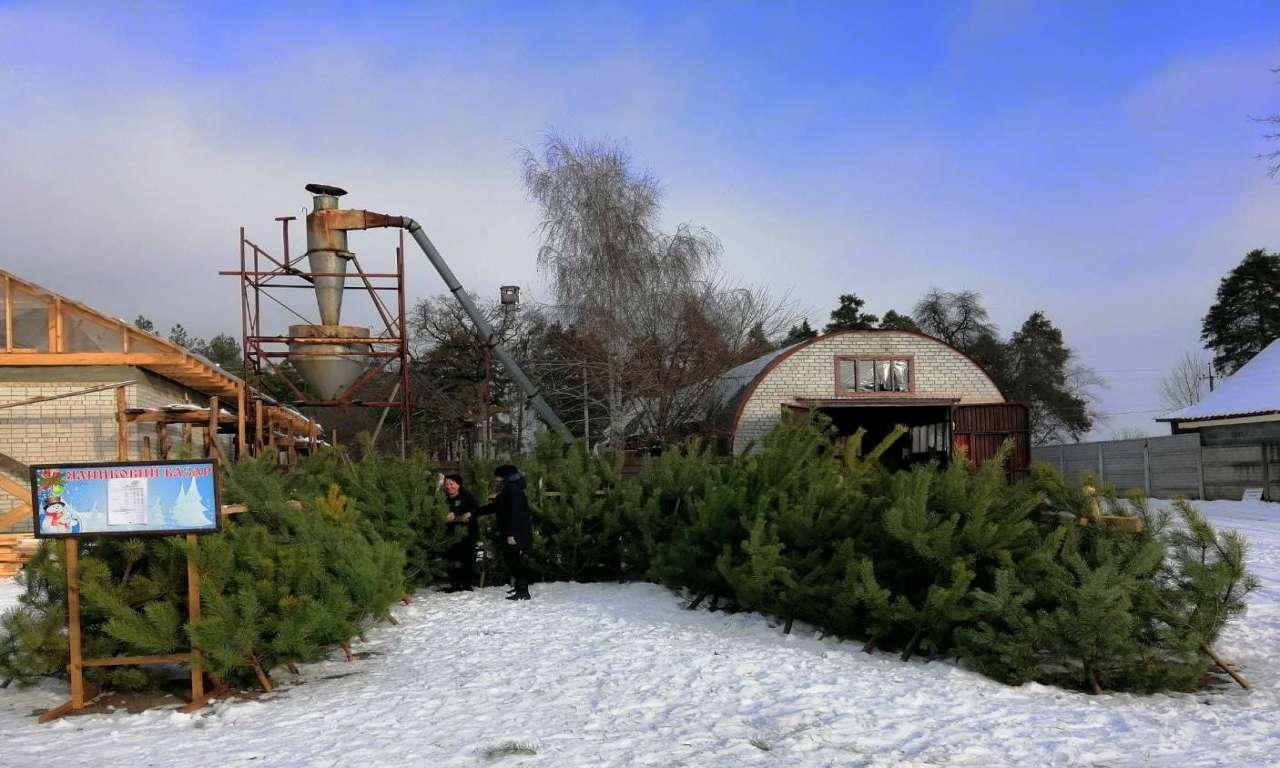 У Руськополянському лісництві вже почали новорічний ярмарок: реалізовано понад 200 ялинок