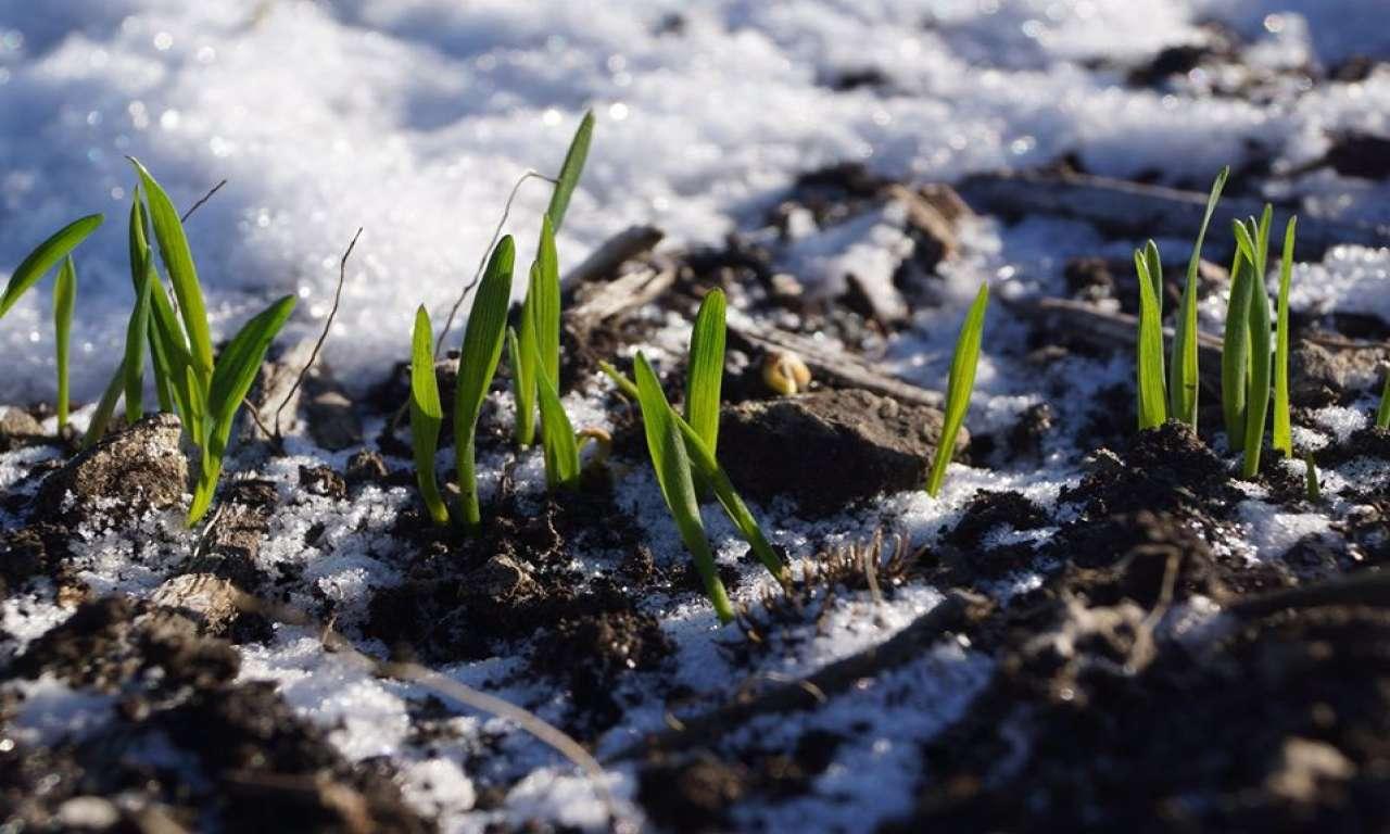 Черкащина зайняла перше місце в Україні з урожайності зернових