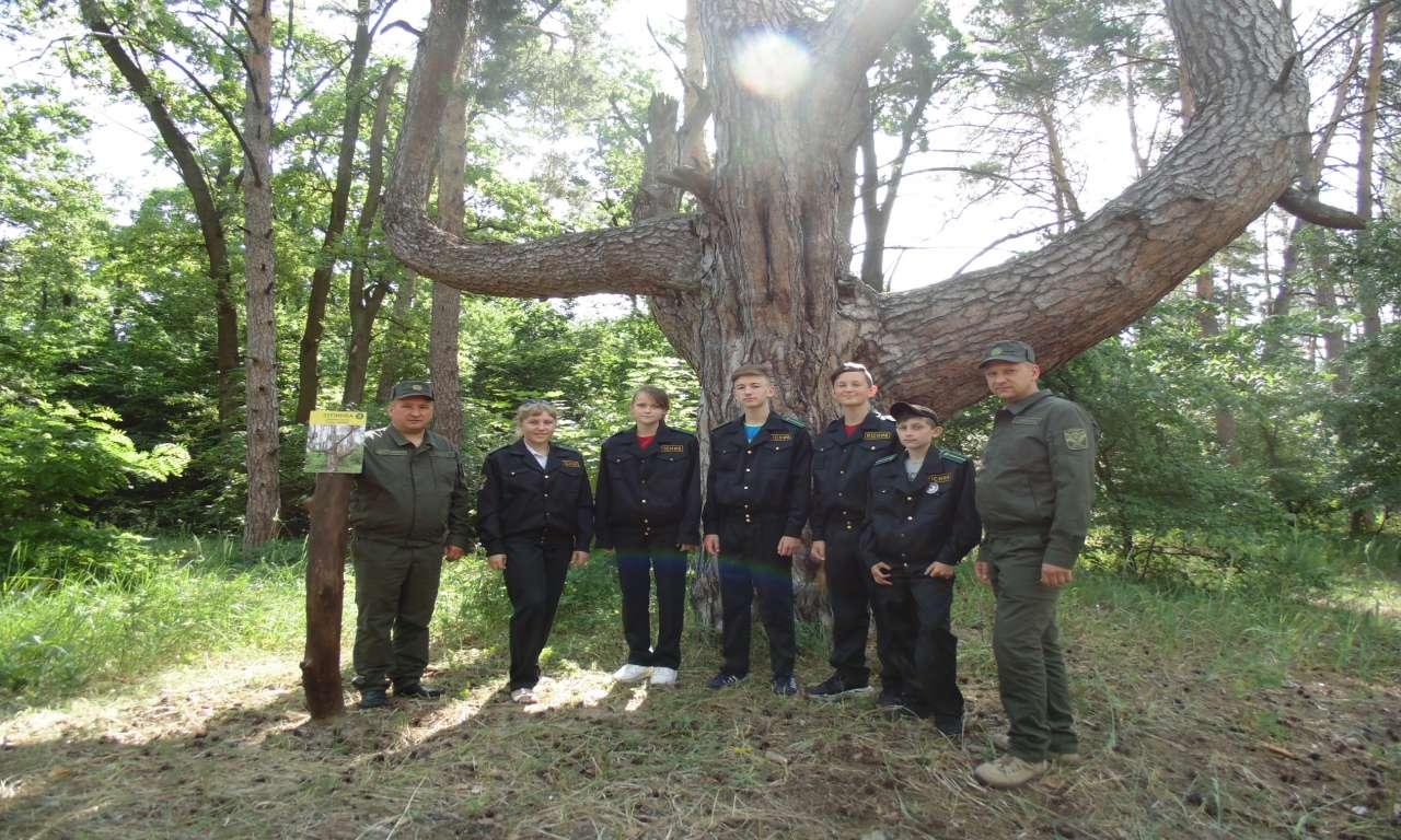 Екологічну стежку у 2 км створили у Вільхівському лісництві