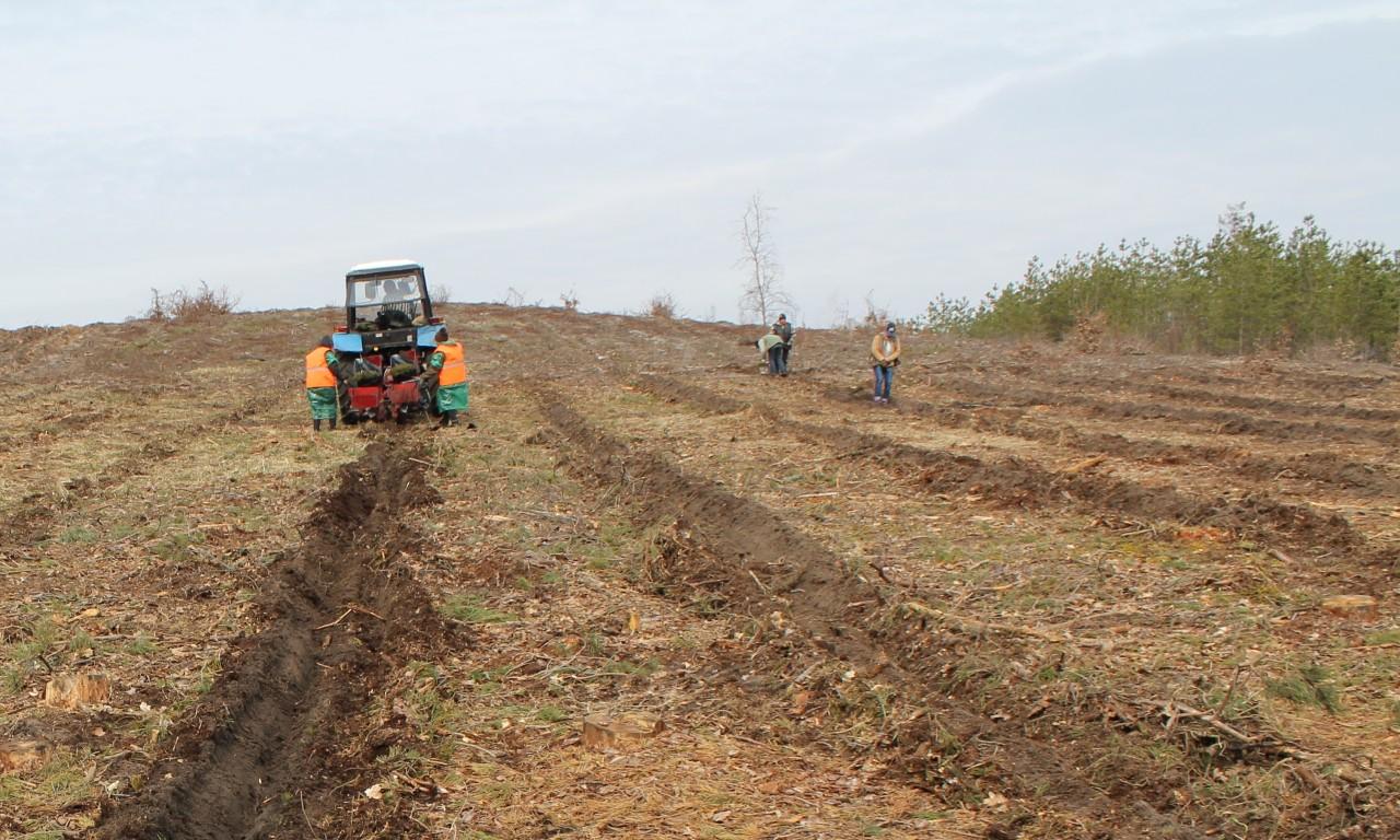 Садіння лісу завершили у Черкаському лісгоспі: механізований спосіб посадки зняли безпілотником (ВІДЕО)