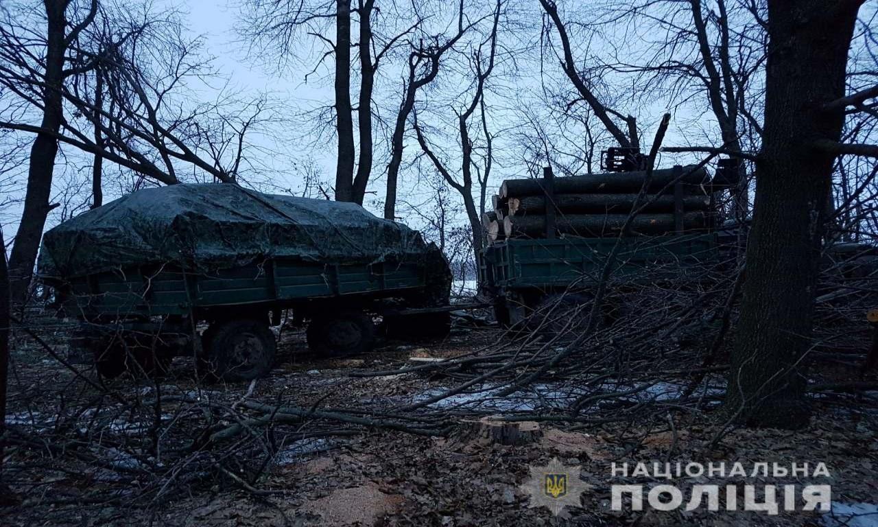 На Христинівщині незаконно вирубували лісосмугу