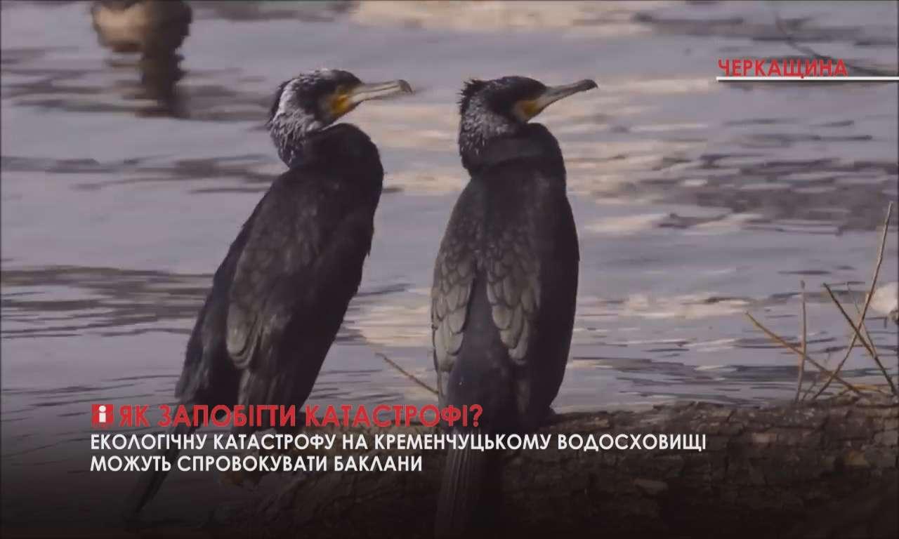 Баклани окупували Кременчуцьке водосховище поблизу Черкас