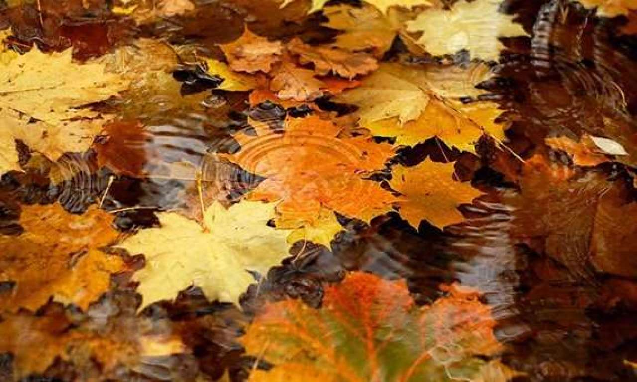 На завтра синоптики обіцяють Черкащині значні дощі: рівень небезпеки «жовтий»