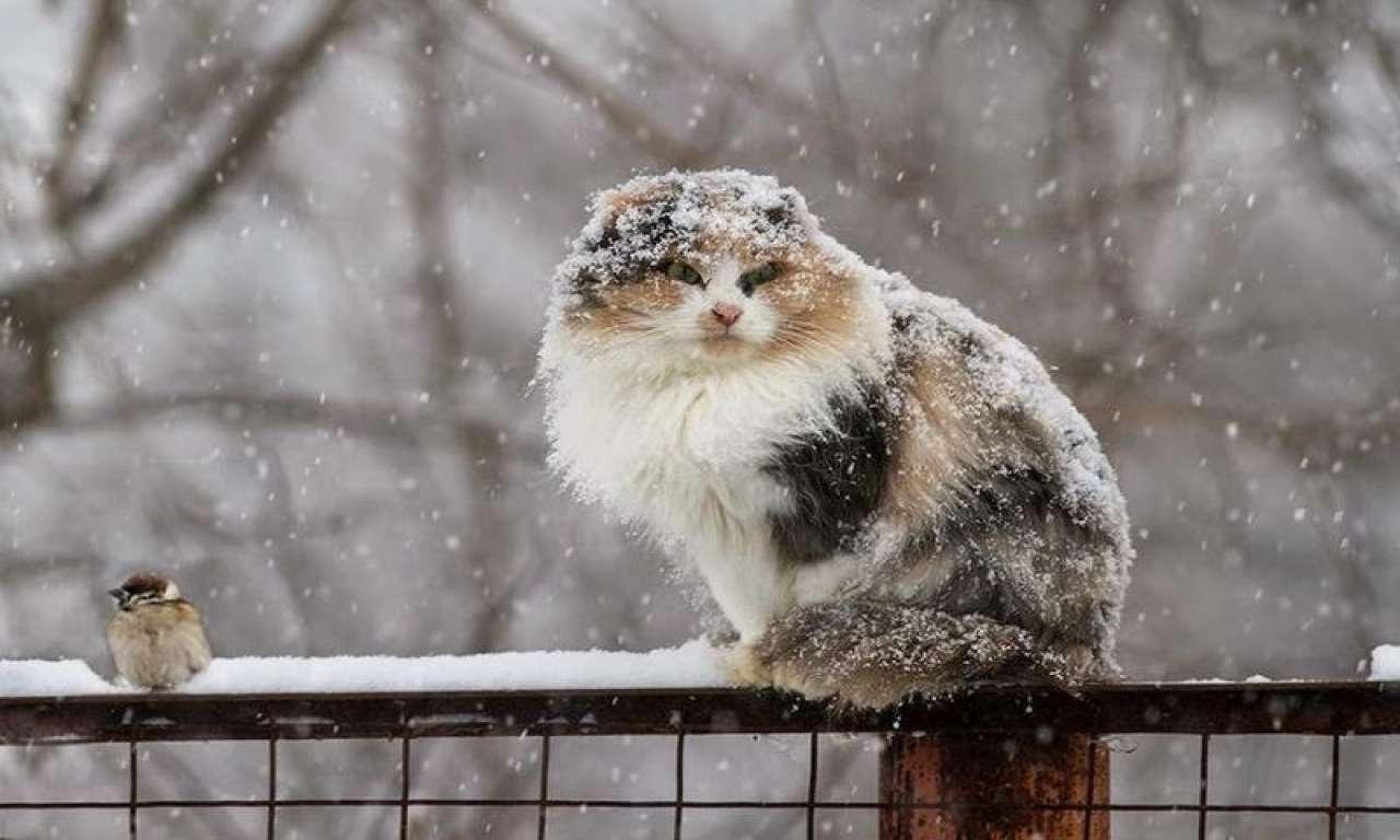 На Черкащину сунуть снігопади