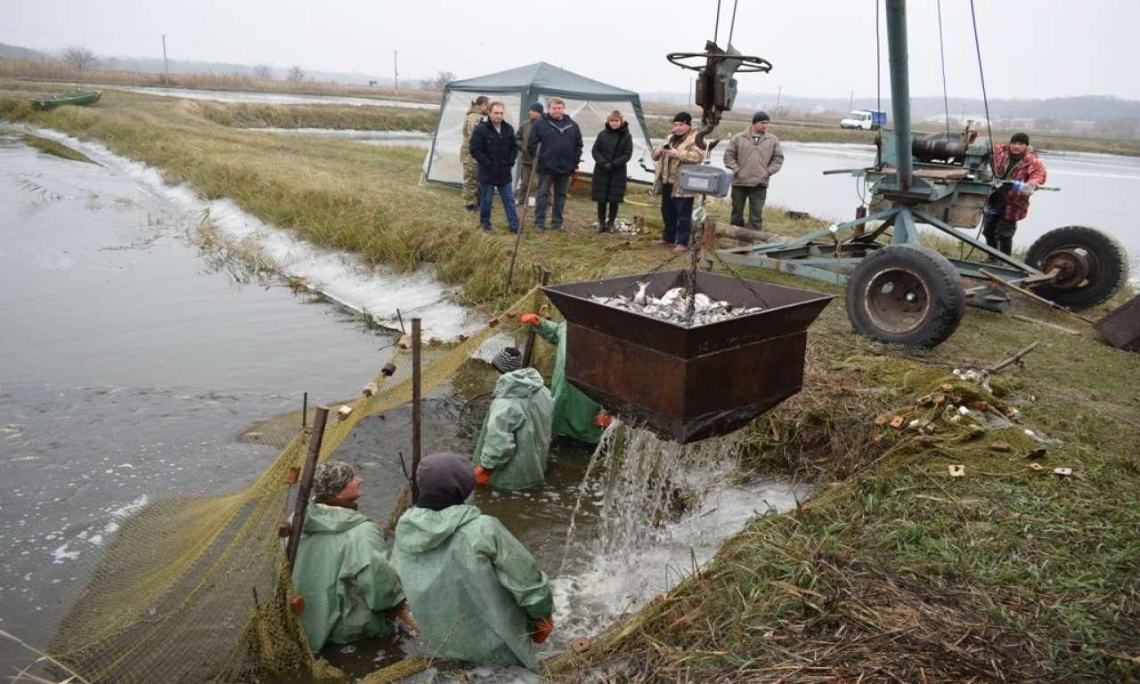 Тридцятьма тоннами товстолоба зарибнять Кременчуцьке водосховище