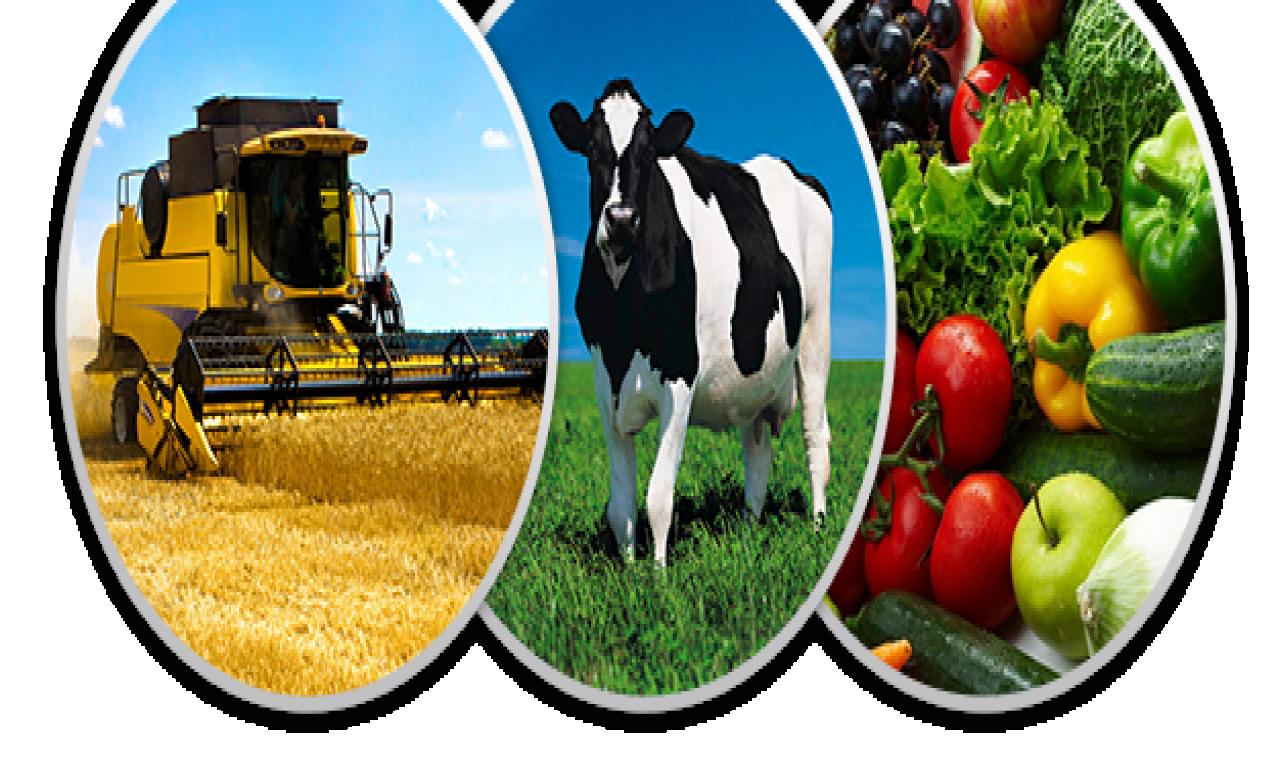 На Черкащині найбільше сільськогосподарських кооперативів в Україні