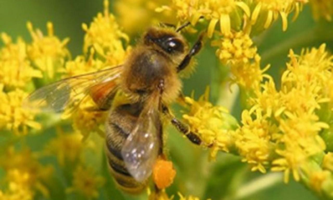 Потрібно зберегти бджіл під час обробки сільгоспкультур, - Ігор Колодка