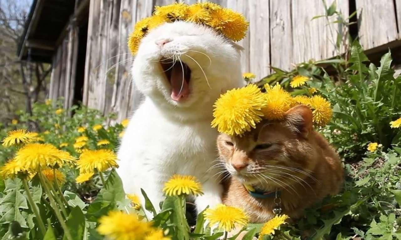 Черкаська влада поділилася пальним з рятувальниками